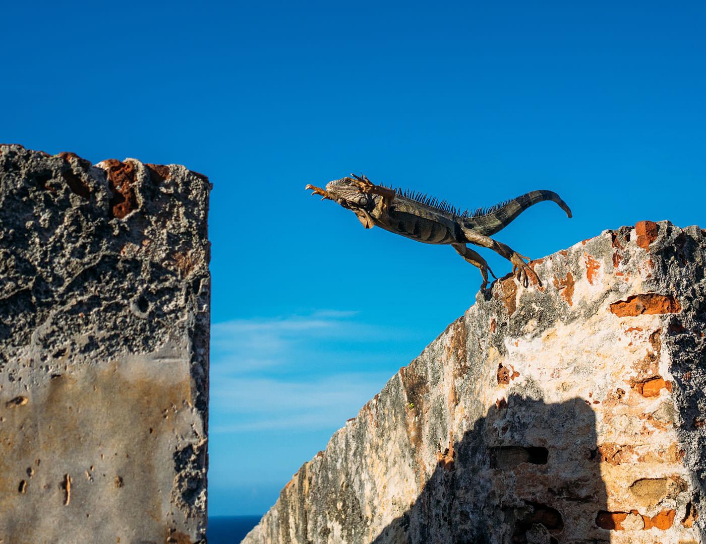 Trust - Lizard Jumping